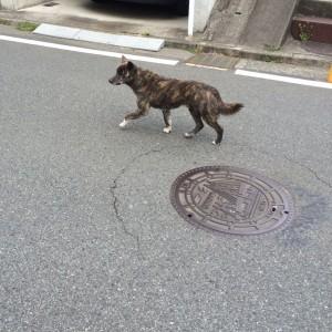 hiratokochi