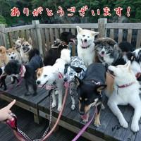 (↑ずいぶんたくさんいますが、元保護犬も混じってます。^^;)