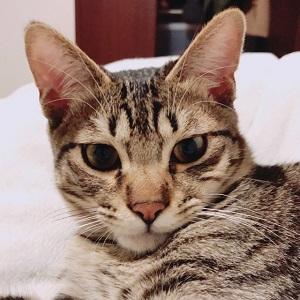 若猫エース