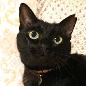 小さな黒猫。